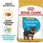 Royal Canin Yorkshire Terrier Junior pour chiot