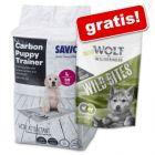 Savic Puppy Trainer Pads + 180 g Wolf of Wilderness Junior Snack på köpet!