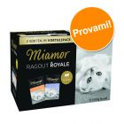 Set prova misto! Miamor Ragù  Royal Kitten 12 x 100 g