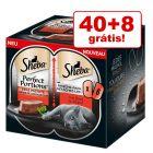 Sheba Perfect Portions 48 x 37,5 g em promoção: 40 + 8 grátis!