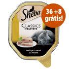 Sheba terrinas 44 x 85 g em promoção: 36 + 8 grátis!