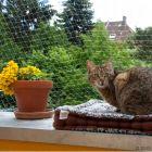 Sikkerhedsnet til katte - transparent