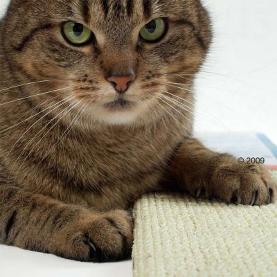 Sisal Cat Scratching Board