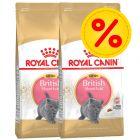 Säästöpakkaus: Royal Canin British Shorthair Kitten