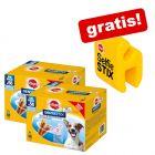 112 Stück Pedigree Dentastix Hundesnacks + Selfie Stix gratis!