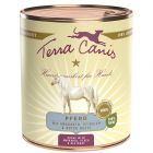 Terra Canis, cheval pour chien