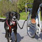 Trixie Biker Set Deluxe sykkelfeste