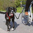 Trixie zestaw rowerowy: uchwyt i smycz