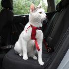 Trixie-autovaljaat kissalle