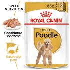 Umido Royal Canin Poodle Adult