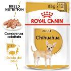 Umido Royal Canin Breed Chihuahua Adult