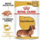 Umido Royal Canin Breed Dachshund Adult