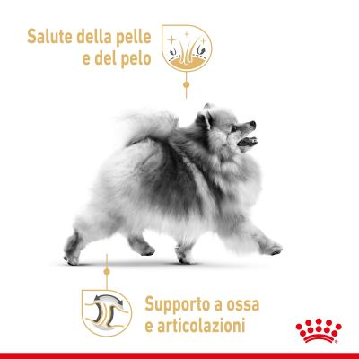 Umido Royal Canin Breed Pomeranian Adult