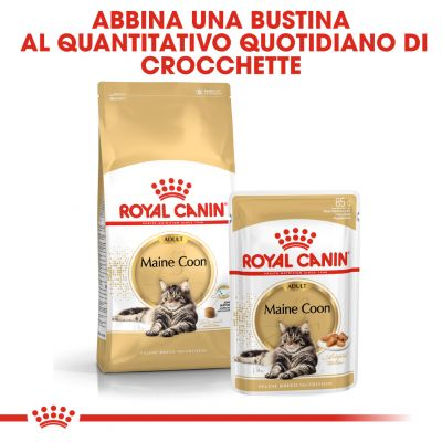 Umido Royal Canin Maine Coon in Salsa
