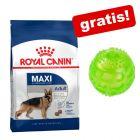 Velika vreća Royal Canin Size + Squeaky Ball gratis!
