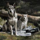 Wolf of Wilderness manta de viagem