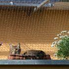 Wzmocniona siatka ochronna w rolce dla kota