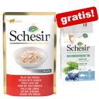 24 x 85 g Schesir Jelly + Natural Selection Sterilized Trockenfutter gratis!