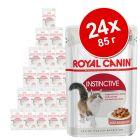 24 x 85 г Royal Canin консервирана храна комбинирана бонус опаковка желе и сос