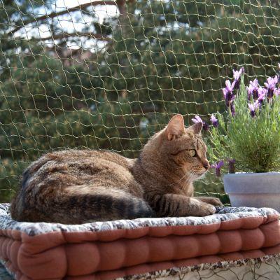 velika maca mreža