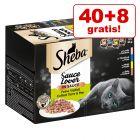 40 + 8 zdarma! 48 x 85 g Sheba za skvělou cenu!