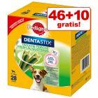 46 + 10 zdarma! 56 x Pedigree Dentastix Fresh pro každodenní svěžest