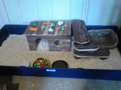 cabin for my guinea pigs