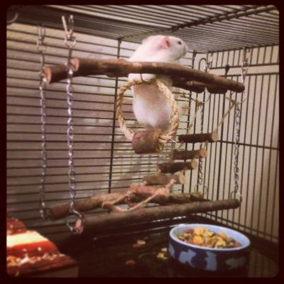Sid loves his climbing frame