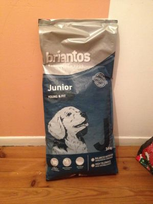 Briantos Junior pour un chiot colley