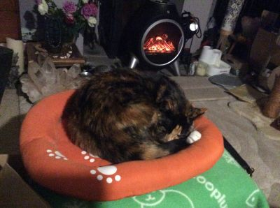 Sound asleep in your cat bed