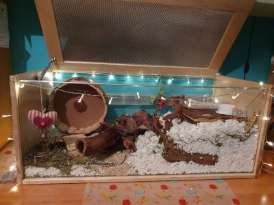 Amazing enclosure for my syrian hamster Emile