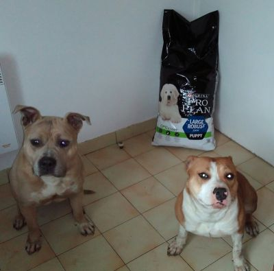 American Staffordshire ProPlan