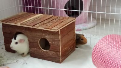Happy Piggy House
