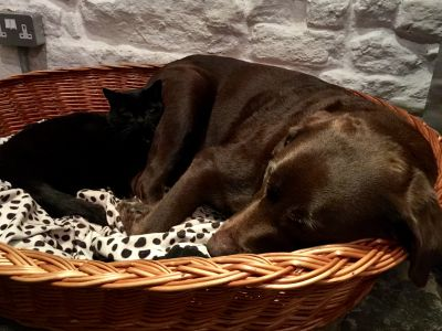 Sausages and Dave the cat in her dog basket