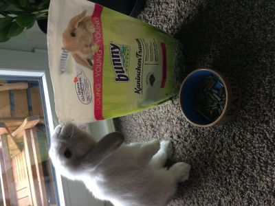Z adore mes croquettes bunny