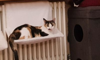 Florie at the warm radiator