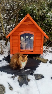 Winter Norway Cats