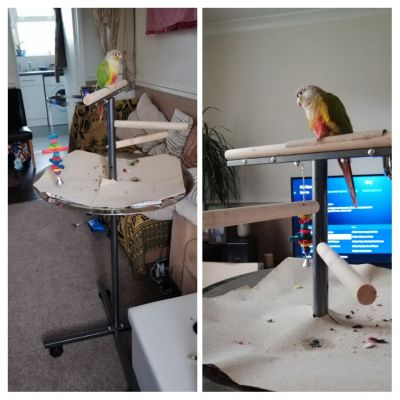 Free standing perch