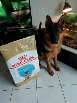 Poker adore Royal canin breed