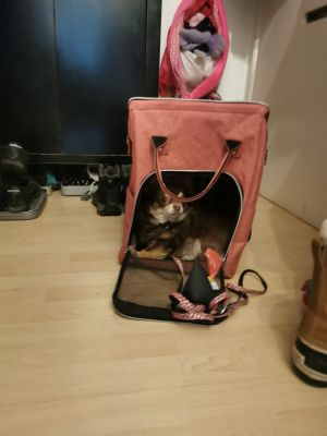 Daisy in her new bag