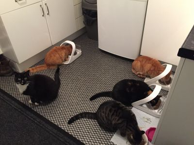 Feeding time at the cat sanctuary