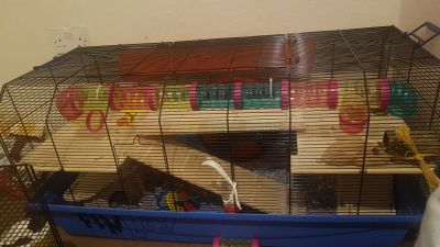 My hamsters Alexander cage