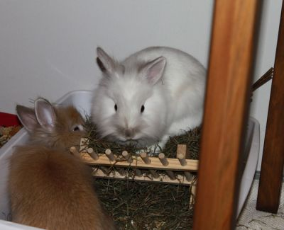 Both my bunnies really like this hay.
