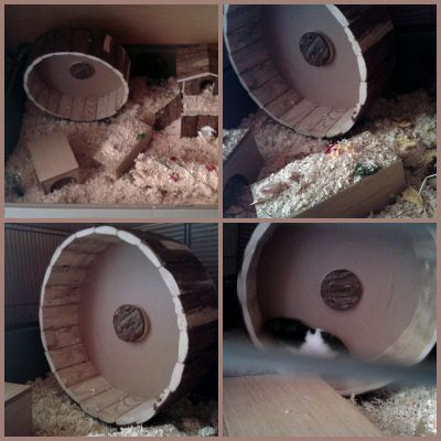 29cm wheel is perfect size for syrian hamsters