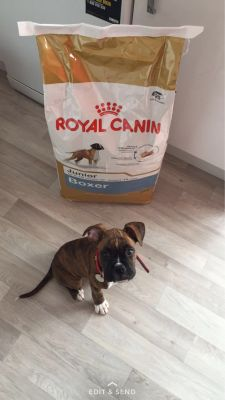 Prince loves his Royal Canin