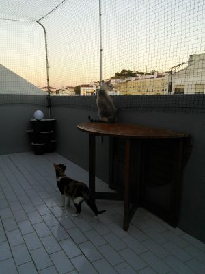 Gatos no terraco