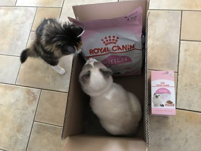 RoyalCanin kitten