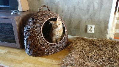 Beautiful cat basket