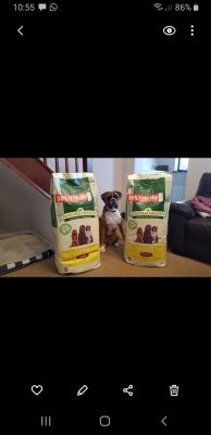 Boxer dog lamb and rice