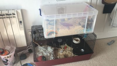 Amazing cage size is fabulous